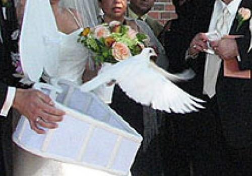 Simon Gábor - Esküvői fehérgalamb röptetés - esküvői szolgáltató