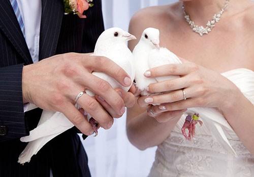 Angyalszárny Esküvői Galambröptetés - esküvői szolgáltató