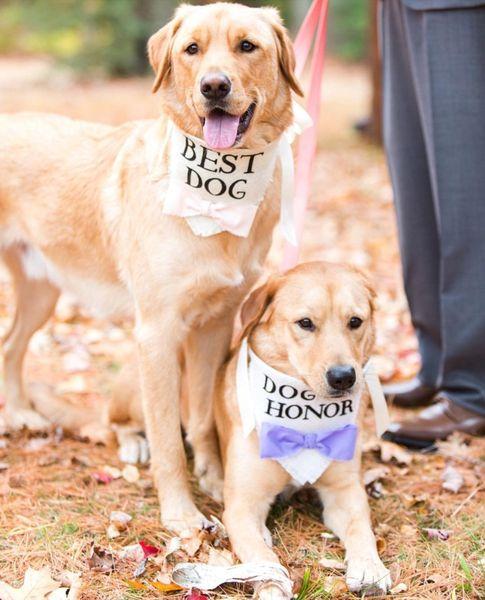 esküvő kutya